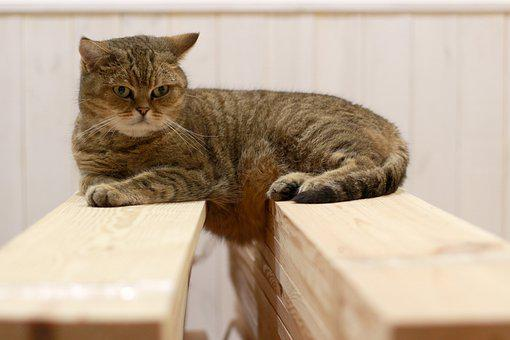 Cat, Vacation, Wool, Boards, I Love It, Relaxation, Fur