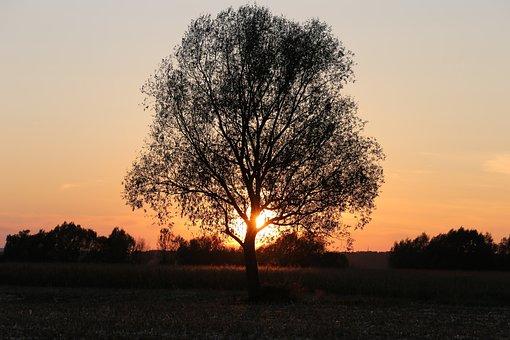 Tree, Sunset, Landscape, Sky, Evening, Golden Hour