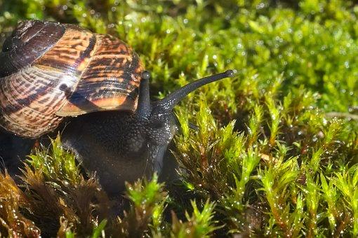Nature, Snail, Macro, Green, Plant, Moss
