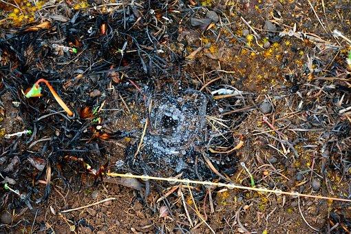 Spiderweb, Rain, Drops, Droplet, Web, Thread, Texture