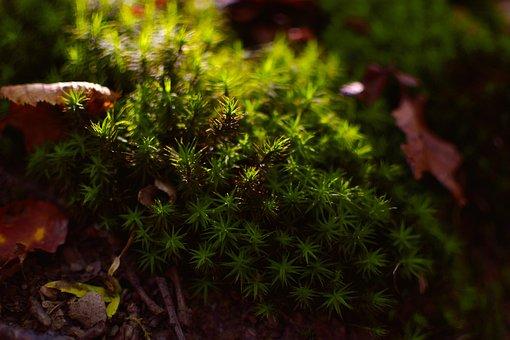 Forest, Moss, Nature, Wood, Autumn, Light, Sunlight