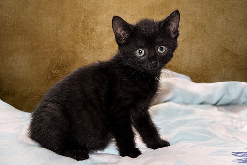 Cat, Small, Kitten, Cute, Pet, Sweet, Charming, Fur