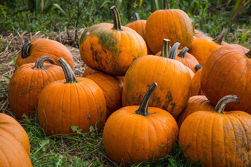 Pumpkin, Autumn, Halloween, Thanksgiving, October
