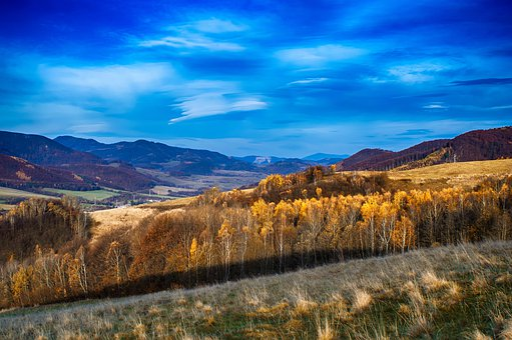 Blue, Blue Hour, Landscape, Wilderness, Slovakia, Tree