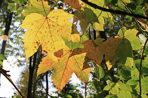Leaf, Fall, Leaves, Colors, Yellow, Tree, Forest