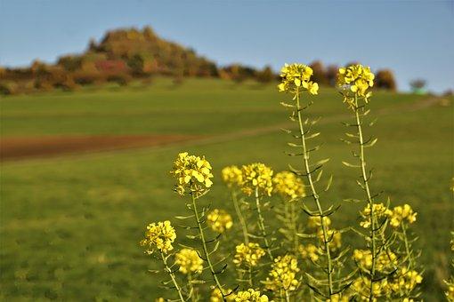 Mountain, Meadow, Flower, Yellow, Oilseed Rape, Summer