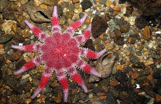 Starfish, Aquarium, Sea Creature, Water, Creature