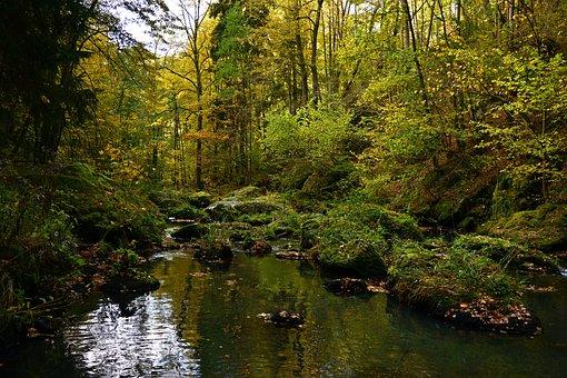 Nature, Autumn, Landscape, Creek, Autumn Colours, Mood