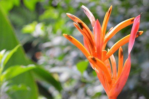 Flower, Bloom, Blossom, Plant