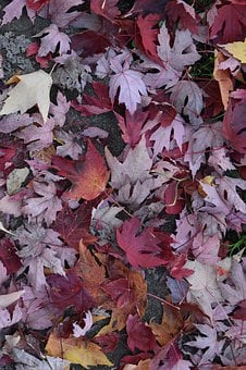 Fall, Trees, Red, Orange, Autumn, Summer, Colorful