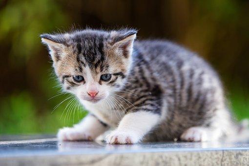 Cat, Baby, Cute, Kitten, Pet, Animal, Portrait, Small