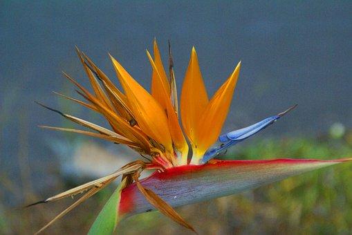 Flower, Exotic, Garden, Flowers, Flora, Orange