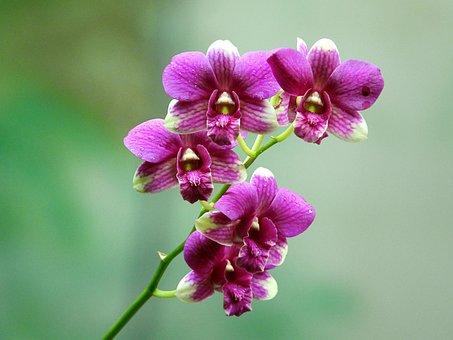 Orchids, Rolling, Flower, Fresh, Flower Garden