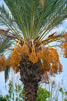 Tree, Palm, Flower, Plant, Nature, Seed, Tropical