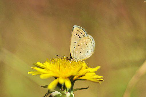 Flowers, Butterfly, Insects, Nature, Animal, Wing, Moth