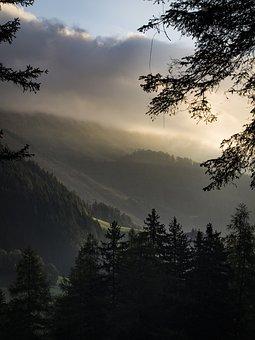 Fog, Forest, Trees, Nature, Landscape, Secret