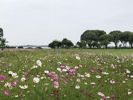 Flowers, Grassland, Beautiful
