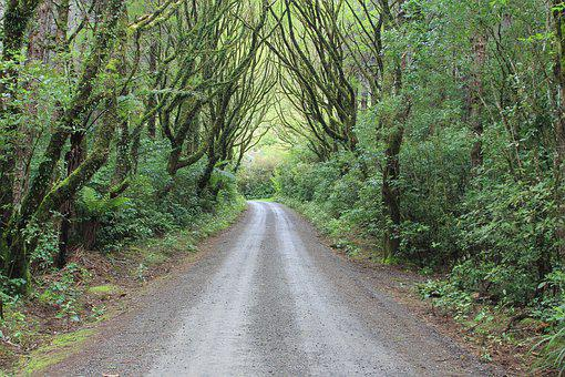 Forest, Tree, Canopy, Gravel, Road, Path, Lush, Green