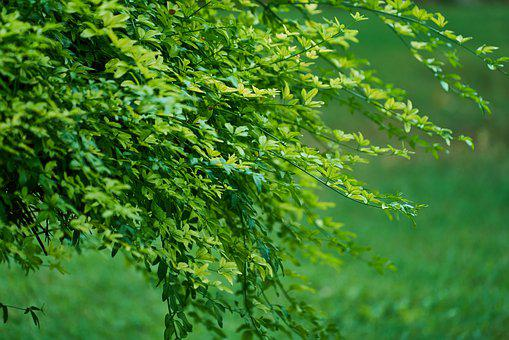 Plant, Tree, Green, Nature, Background, Spring