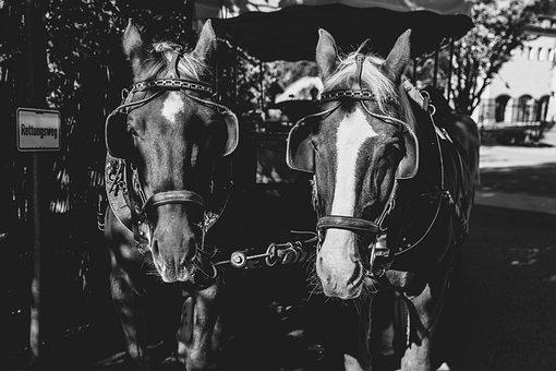 Horse, Black And White, Coach, Animal World, Mammal