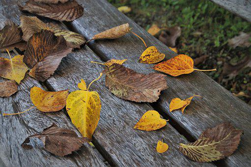 Leaves, In The Fall, Sit, Bench, Cozy