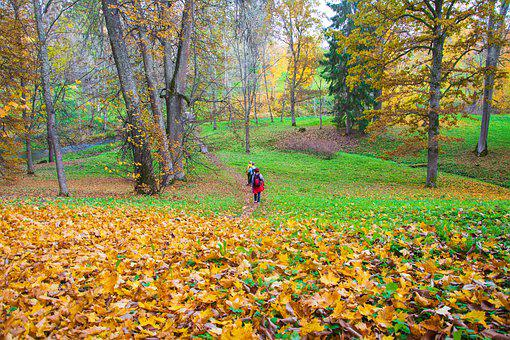 Autumn, Hikers, Forest, Fall, Outdoor, Landscape