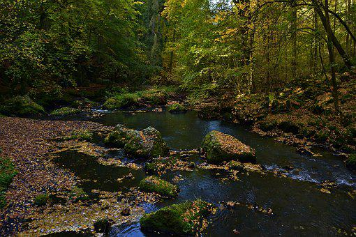 Autumn, Nature, Creek, Forest, Landscape, Leaves
