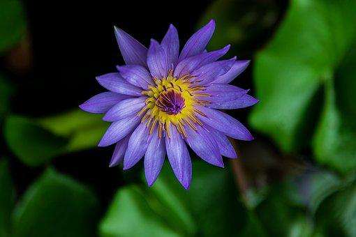 Lily, Thi Vai Mountain, Beautiful Flower, Vietnam