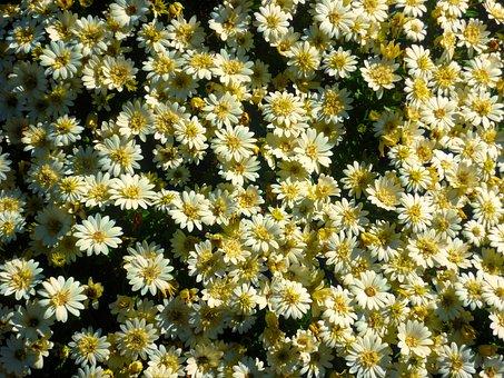 Flowers, Flora, Nature, Garden, Yellow