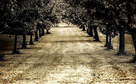 Avenue, Tree, Meadow, Away, Path, Landscape
