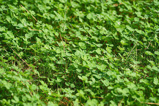Plant, Green, Nature, Leaves, Pattern, Spring, Garden