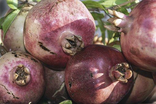 Health Day, Pomegranates, Ripe, Harvest, Delicious