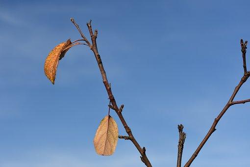 Autumn, Apple Tree, Sheet, Last, Sky, Branch
