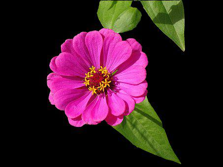 Flowers, Plants, Color Pink, Summer, Fulfillment