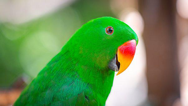 Red, Green, Parrot, Bali, Zoo, Indonesia, Summer