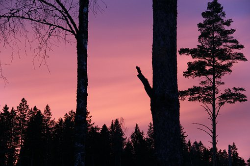 Forest, Sunset, Pink, Sky, Tree, Evening, Background
