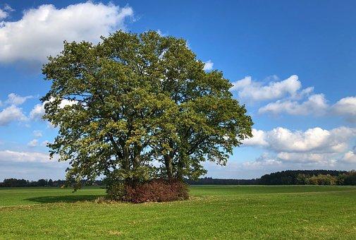 Tree, Landscape, Nature, Sky, Clouds, Mood, Autumn