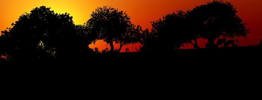 Sunset, Trees, Nature, Landscape, Sky, Evening, Orange