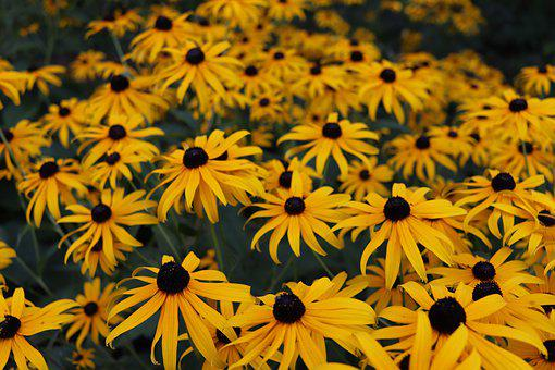 Flowers, Yellow, Summer, Blossom, Plant, Garden