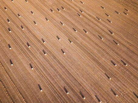 Hay Barrel, Hay, Agriculture, Grass, Autumn, Dry, Grain