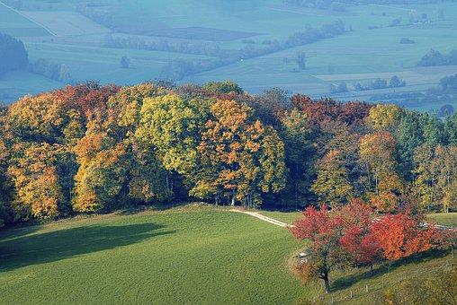 Forest, Autumn, Nature, Landscape, Trees, Leaves, Mood