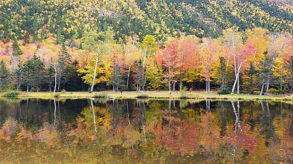 Tree, Colors, Autumn, Nature, Colorful, Landscape