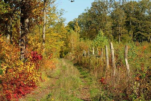 Forest, Forest Road, Autumn, Landscape, Nature