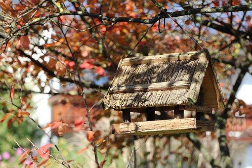 Autumn, Leaves, Aviary, Sun, Fall Leaves, Nature