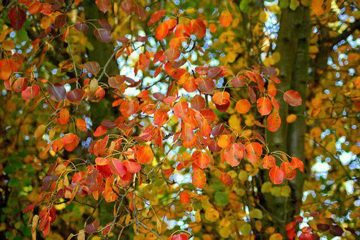 Autumn Tree, Red Leaves, Season, In The Fall, Colored