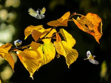 Nature, Autumn, Forest, Animals, Birds