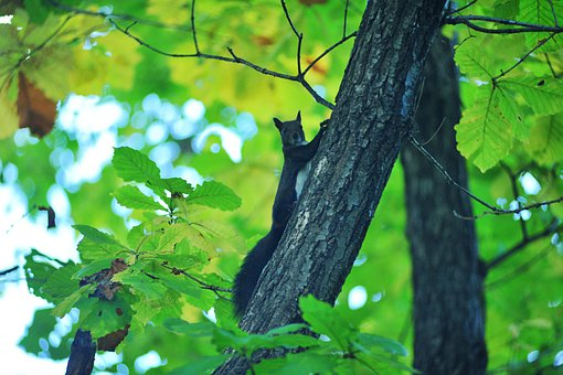 Squirrel, Boots, Forest, Autumn, Animal, Cute, Black