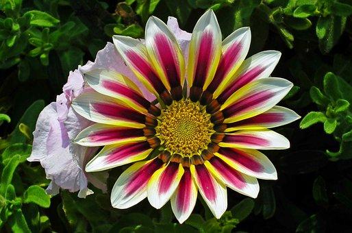 Flower, Colored, Nature, Garden, Summer, Macro, Closeup