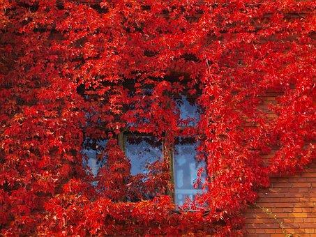 Autumn, Leaves, Nature, Fall Foliage, Colorful