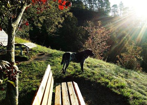 Dog, Pet, Dawn, Morning Walk, Animal, Trust, Nature